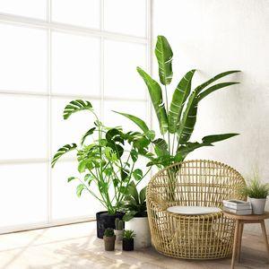 観葉植物を飾る