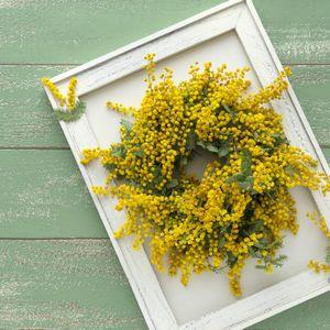 黄色いミモザの花