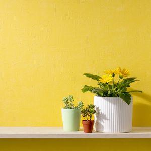 黄色い壁と黄色い花